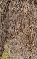 Bark Texture 01 by goodtextures