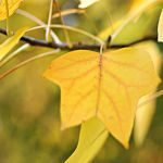 and the autumn is yellow  too by MorkOrk - Sar� [Avatarlar]