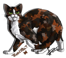 Tawnypelt by AmyVsTheWorld