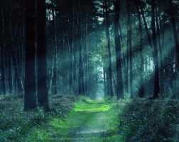 Magic Forest by anneclaires