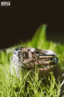Ari and Laura Wedding Rings in Nature by MavilaPhotography
