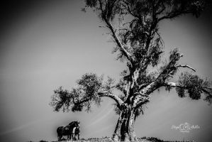 Under the Old Cottonwood Tree by StephGabler