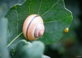 Meeting on a leaf by MCL28