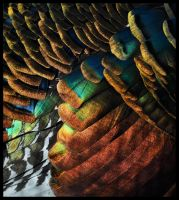 Rainbow Feathers by Skia