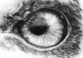 Eagle's eye in pencil by KoKosasih