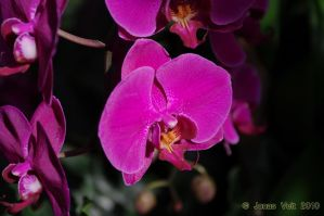 Orchid V by friedapi