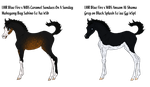 Arabian Bloodline Foals - Feat. LHR Blue Fire by angry-horse-for-life