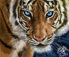 Intense stare of a tiger by chaseroflight