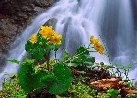 Spring at waterfall by lica20
