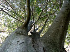 Big Tree by Michies-Photographyy