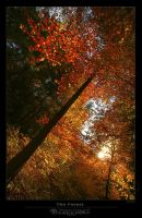 The Forest by BlackdoG-MT