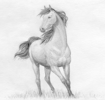 Horse by lefty59