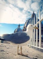 Gull and The St.Pietro by yourPorcelainDoll