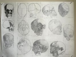 Unfinished Skull study by LeoCronis