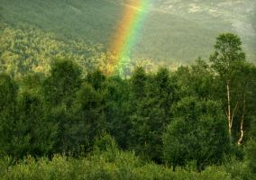 Rainbow Forest by Navanna