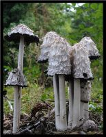 Gnome Homes by andras120