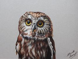 Civetta Owl DRAWING by marcellobarenghi
