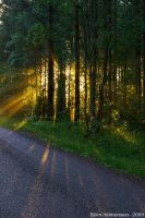 A Light Beyond the Forest by Gilgond