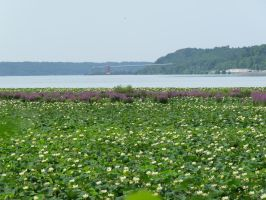 Plants on the Mississippi 4 by MrRstar