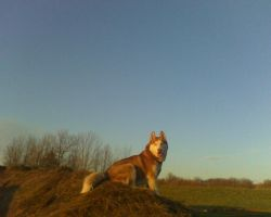 Kody on a Haybale by lucidcoyote