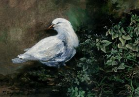 White Dove by Ensomniac