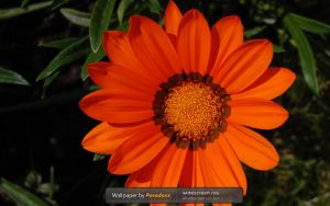 Orange Power WP by prdx-design