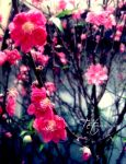 Flowers of the Tet by ZinnieN