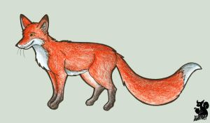 Red fox by AllerleiArt