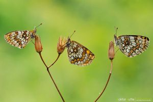 Sisters - DK2 by Stefano-Coltelli