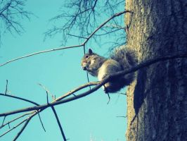 Squirrel. by andreachichizola