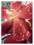 Droplets 2 by Cackleberry
