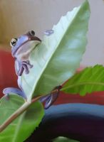 Hi there Mr. frog by Stacy-Parker