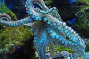 octopus by mnk7