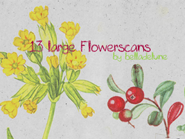 13 Large Flower Scans by zakurographics