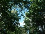 Forest's Canopy by ChaosTranquility-Nyt