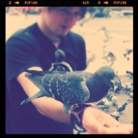 The pigeons of Barcelona by Sebyy