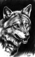 Timber Wolf by Spectrum-VII