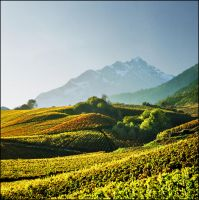 Alpine vineyards by jup3nep