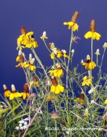 Yellow And Blue by mudhead1