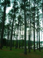 South Carolina Forest by abuseofstock