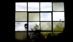 the window by castitas