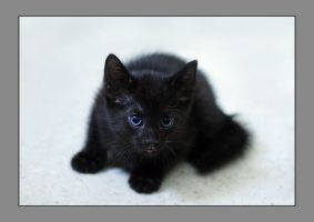 Little black kitten by hoschie