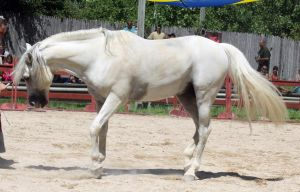 Andalusian Walk by roar-shack-stock