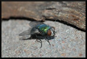 Fly by tspargo-photography