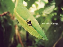 Green Snake by ronnyyax