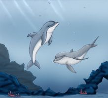 Dolphins Play by Tashababy