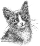 Smiling kitten by Amarevia
