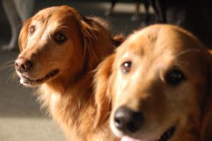Hunley and Brinkley by char1otte
