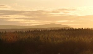 Gortnamoyagh Forest at sunset by younghappy