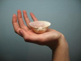 shell by LuckyStock
